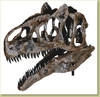 Allosaurus sp. BIG AL TWO Skull - Fossil Replica